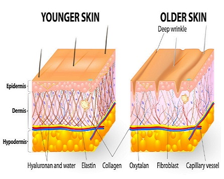 Header-Collagen-Foods-For-Younger-Skin