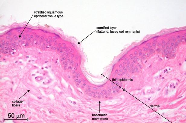 HistPaper01_Fig2