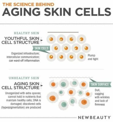 27360-120857-aging-skin-infographic561628026.jpg